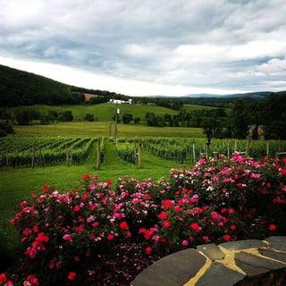 loudoun_county_winery.jpg