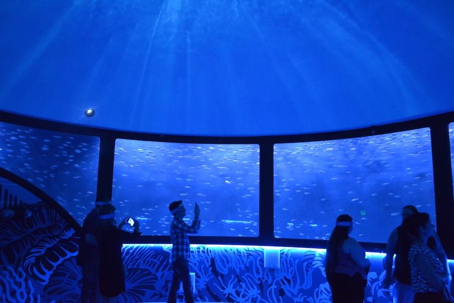 Sea Life.jpg